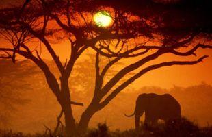 Kenya 10-Day Safari Tour