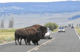 美國六大國家公園11天 (黃石公園,總統巨石,大提頓,布萊斯峽谷)