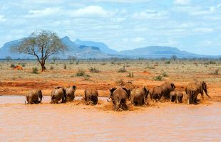 KENYA & MADAGASCAR 16 DAY TOUR